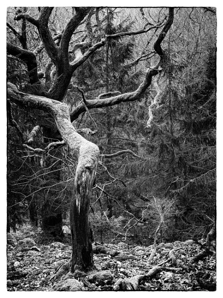 Twisted Forest by hrsimages