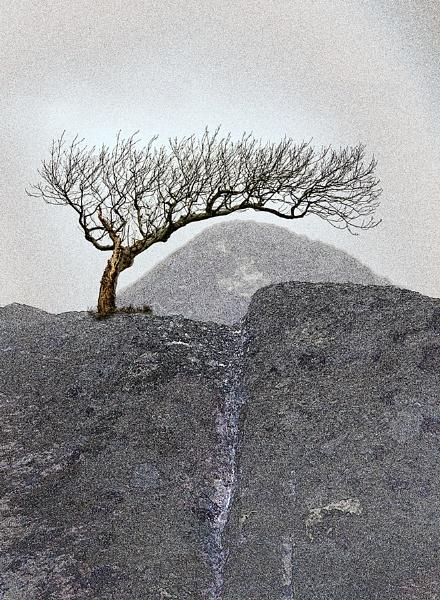 Tree on Rocks by peter74