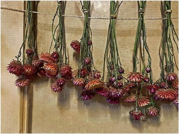Dried Flowers by sueriley
