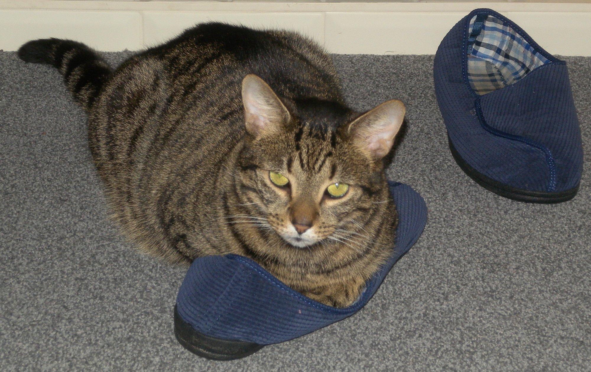 Slippercat