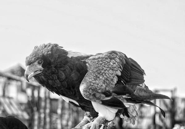 Mono bird by KrazyKA