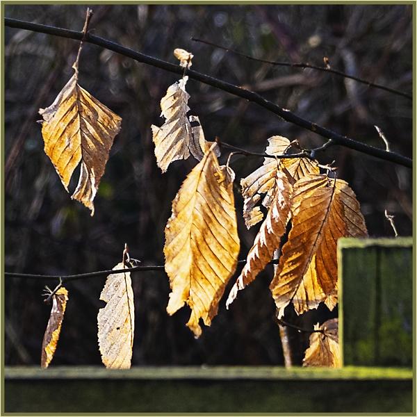 Last of the Hangers On by AlfieK