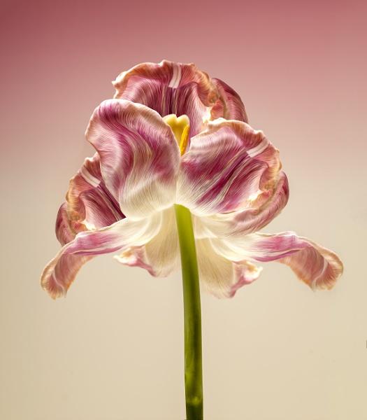 Flower by Durante