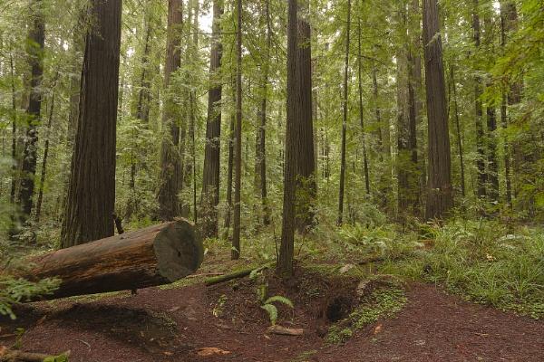 Renewed Forest Life - Eugene Area USA by VincentChristopher