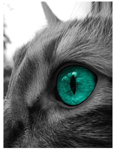 Into the Heart of a Cat by ArtByAyeva