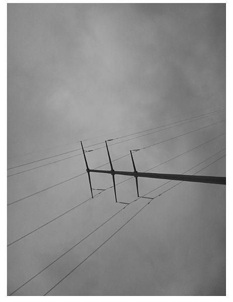 Greys in Life by ArtByAyeva