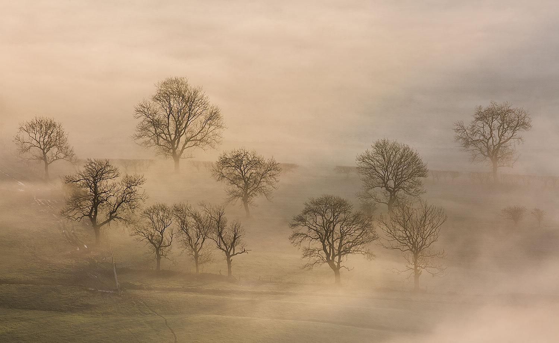 Trees Revealed