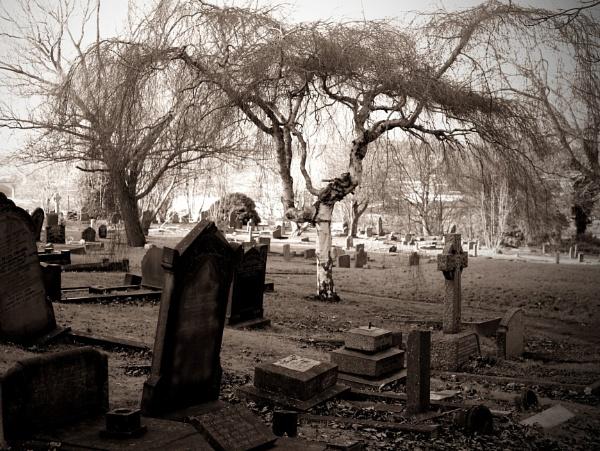 Tree in Cemetery by RysiekJan