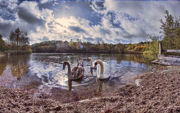 Swan Lake by sandwedge