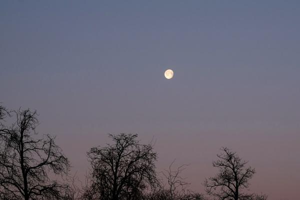 Morning Moon by bluetitblue