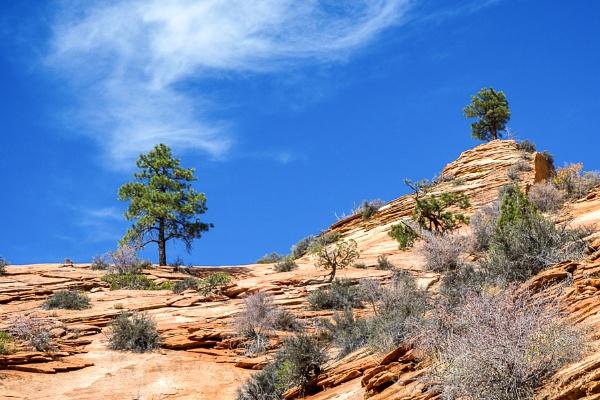Ancient Escarpment in Zion National Park by Phil_Bird