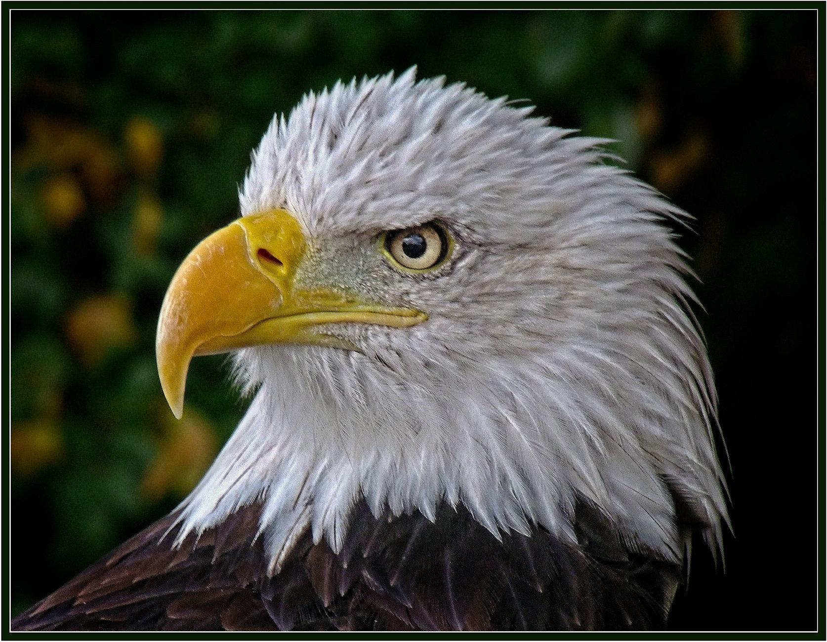 Eagle Eye (9)