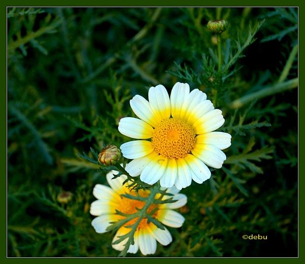 My Lovely Flower..2 by debu