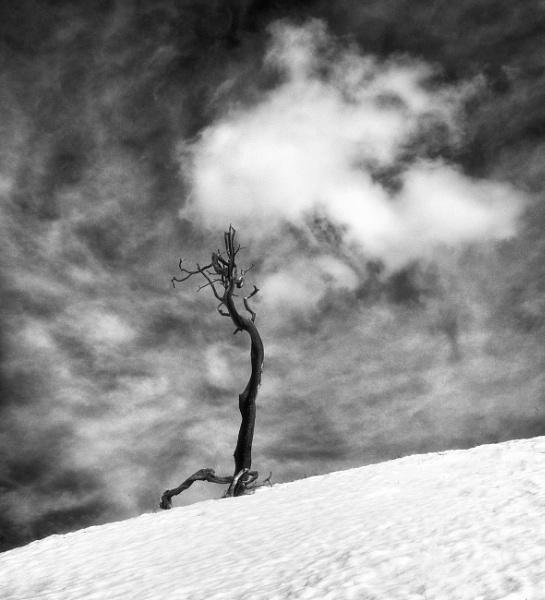 Winter still by mlseawell