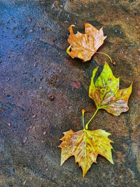 Autumnal tones by StevenBest