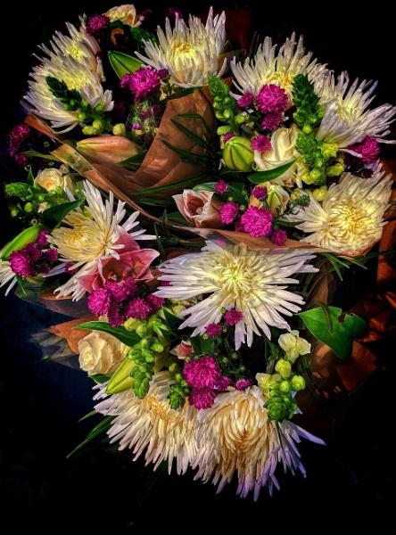 Beautiful flowers on a wet Sunday by StevenBest