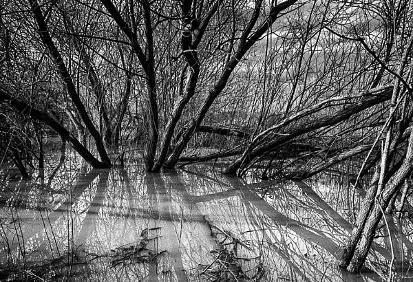 Swamp by RLF