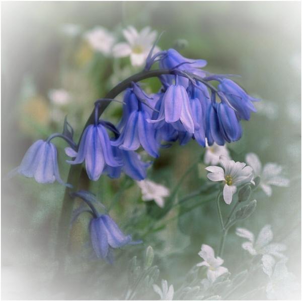 Dreamy Blue by sweetpea62