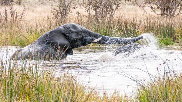 Playful elephant and calf by pdunstan_Greymoon