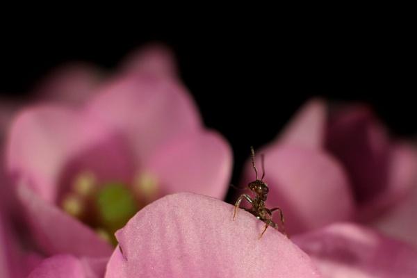 A wee ant! by mdc0ffey