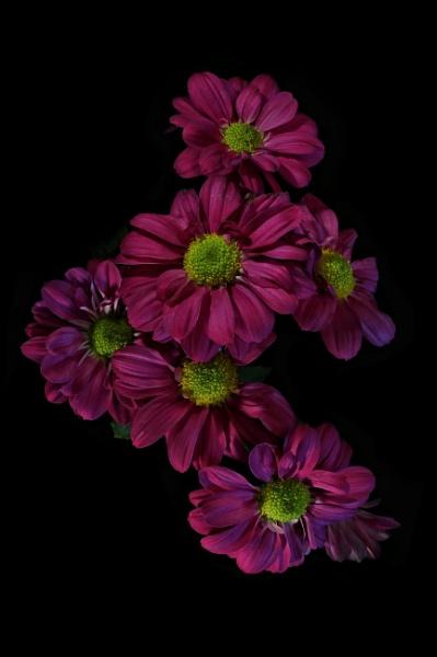 Flowers by mdc0ffey