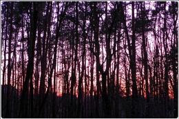 wintersunset wood