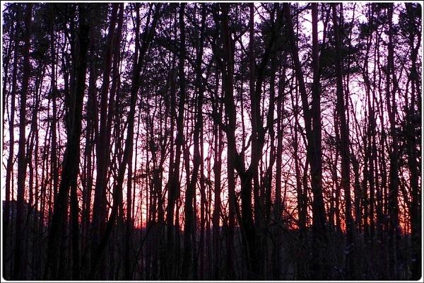 wintersunset wood by FabioKeiner