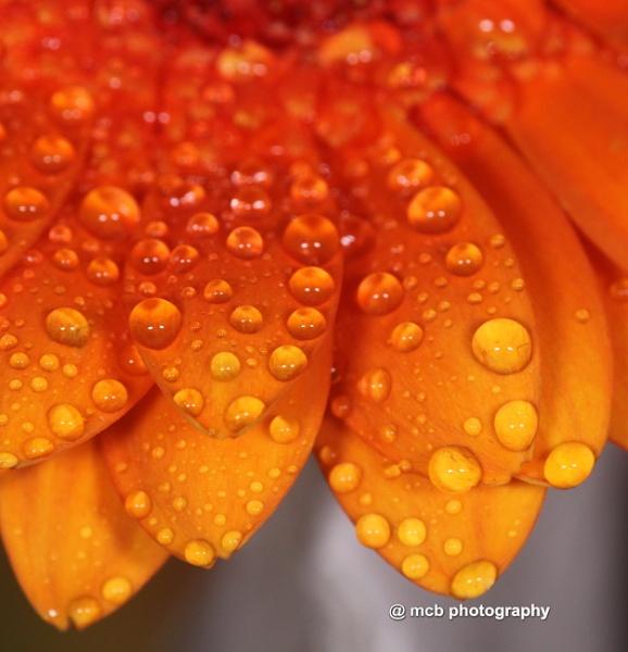 Orange by shell68