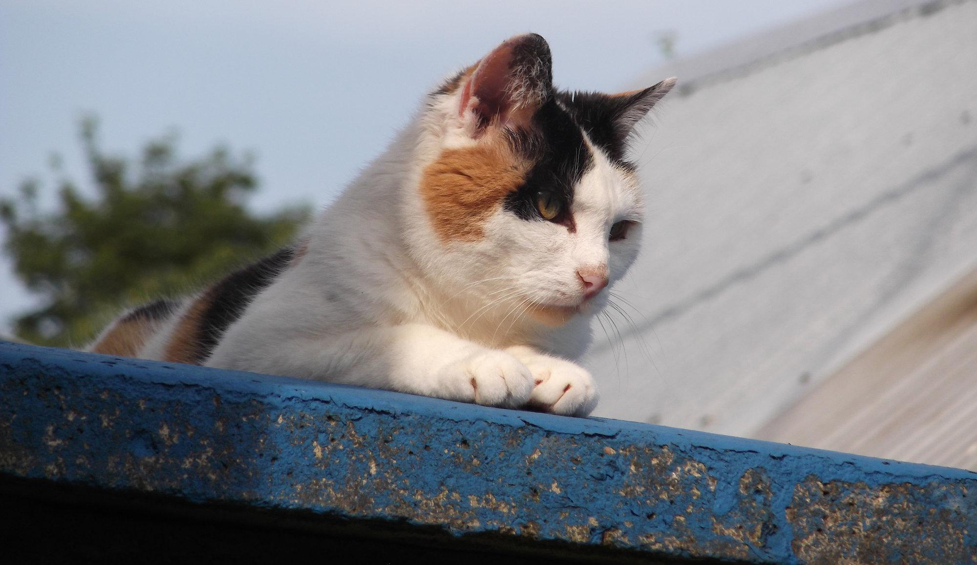 Neighbour's pet