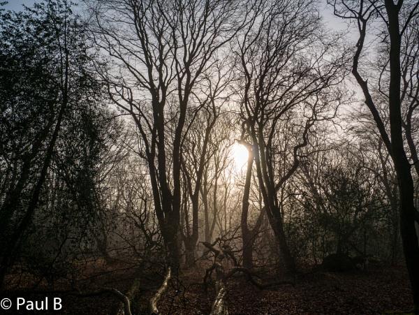 Misty Forest by paulmerhaba