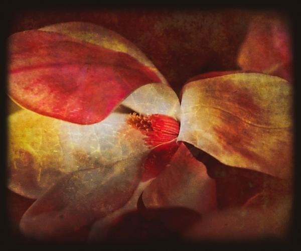 Vintage Magnolia by LoryC