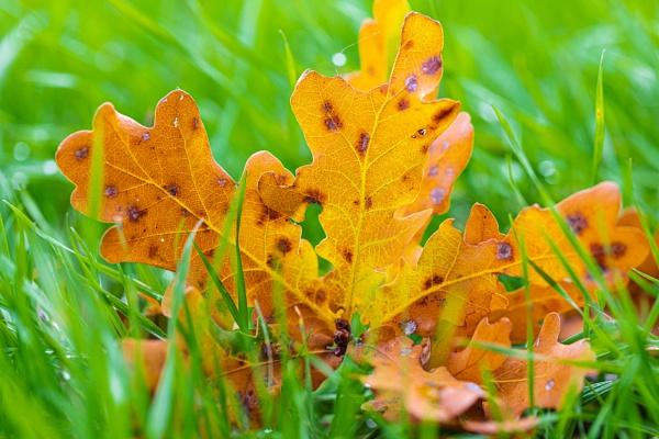 Herbstblatt by mongol