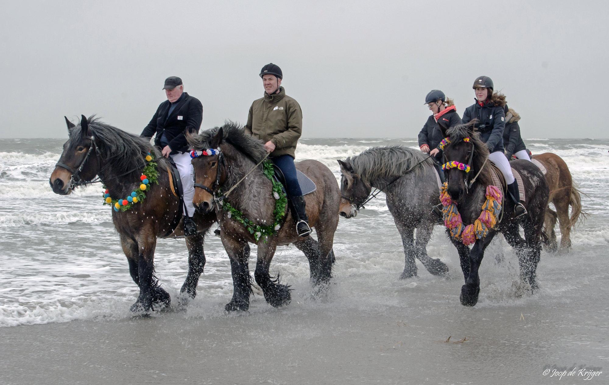 Paddling Horses