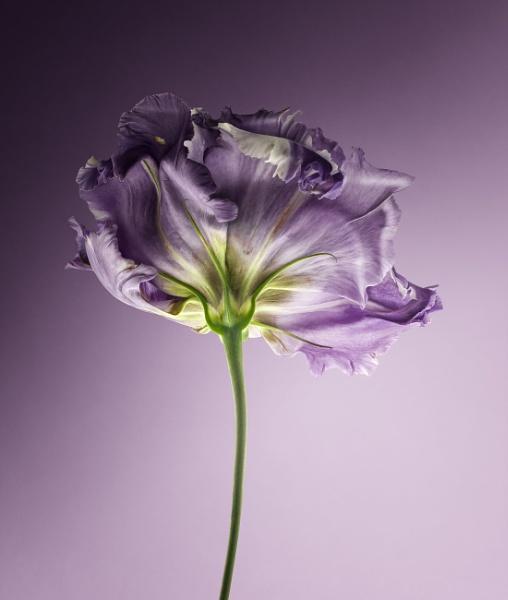 Flower III by Durante