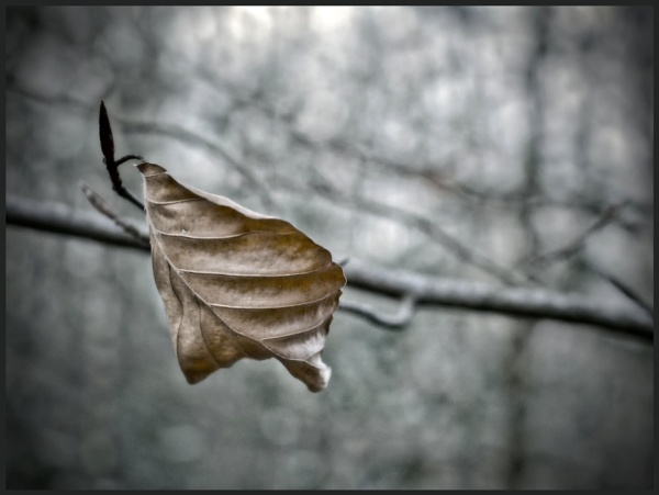 Lonely Leaf by kw