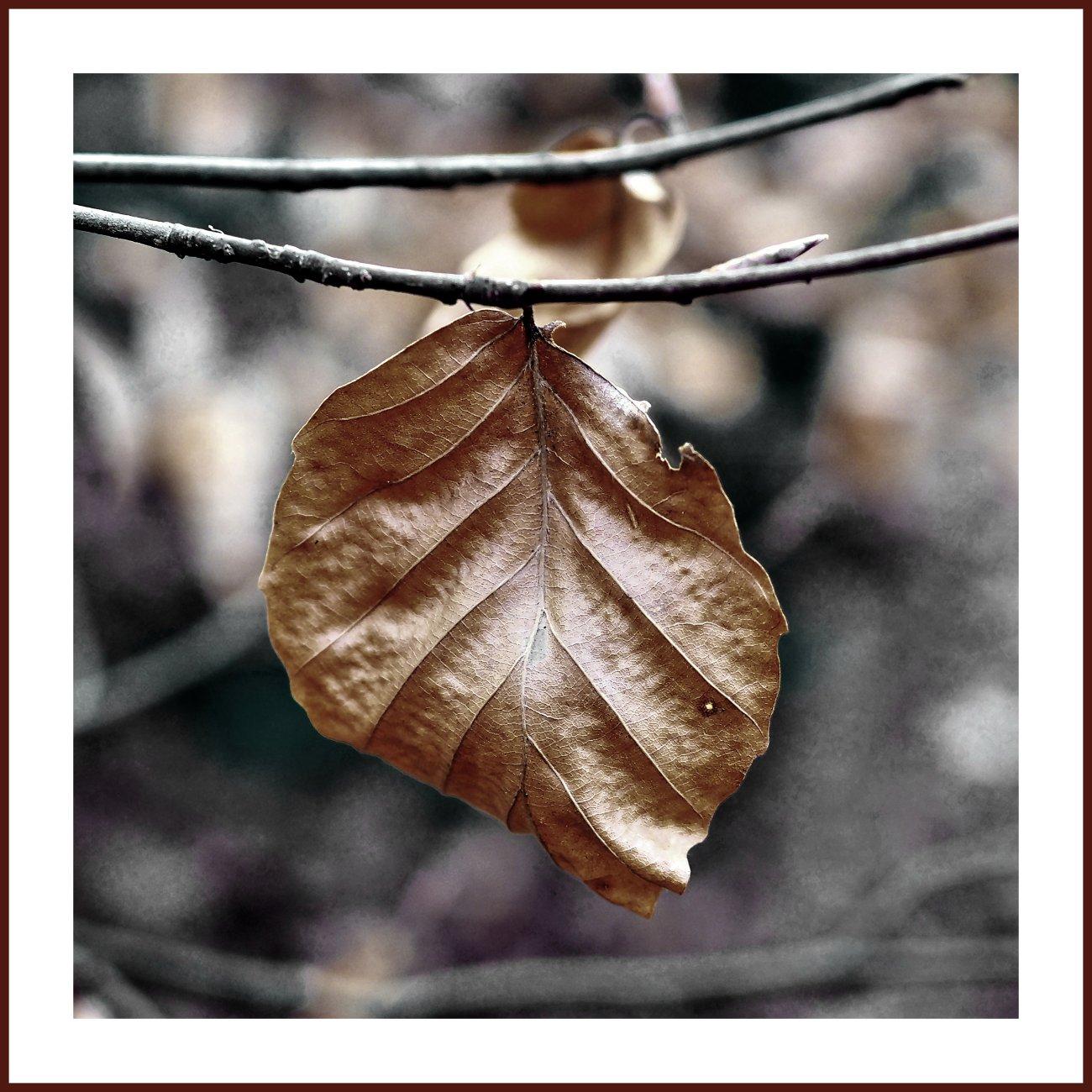 Lonely Leaf II
