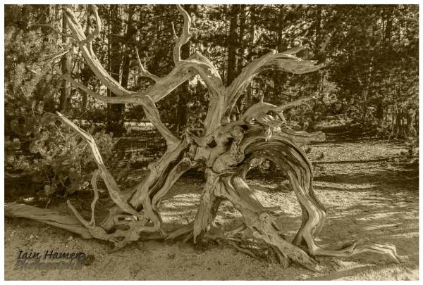 Tree Roots by IainHamer