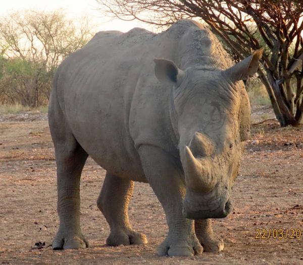 White Rhino by BlueJonnyp