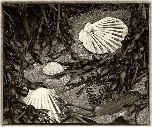 Shoreline by MalcolmM
