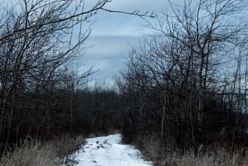 a Path at the Dofasco 2000 Trail