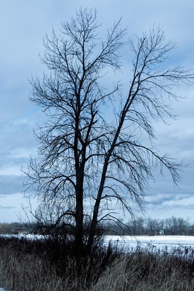 a Tree at the Dofasco 2000 Trail by TimothyDMorton