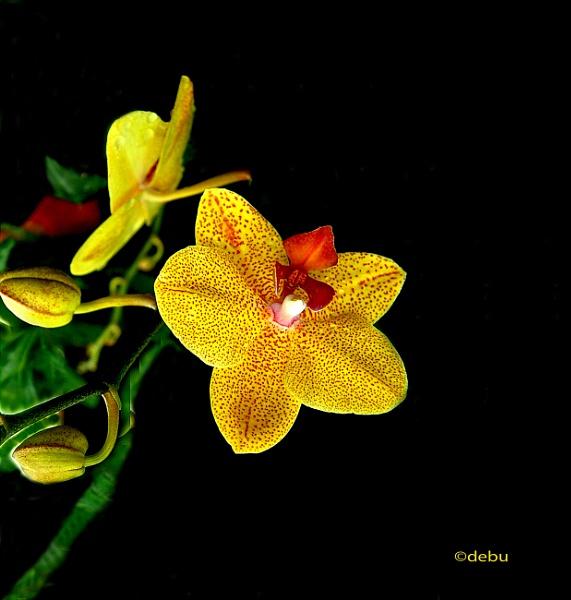 Flower of Dream..2 by debu