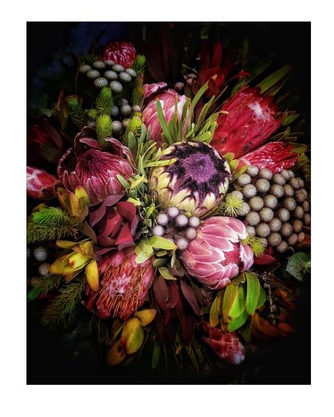 Protea flower display by StevenBest