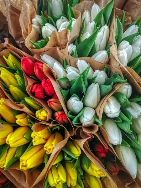 Tulips Flowers of spring  by StevenBest