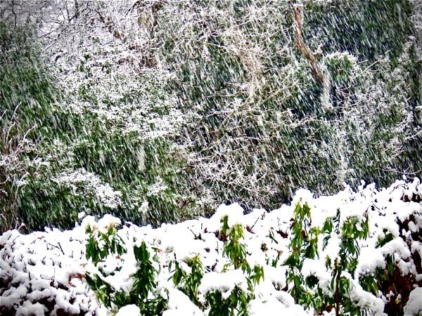 Snow,snow,snow by derekp