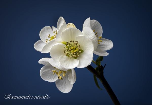 Macro flower by Photo_Lee