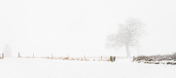 Lone Tree in Snow by DalesLass