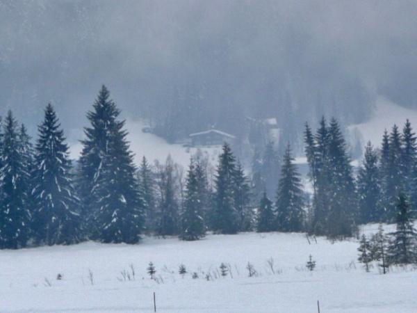 Cold Day by carol01