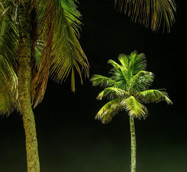 Palm Tree Cocacabana Beach by Skyerocket