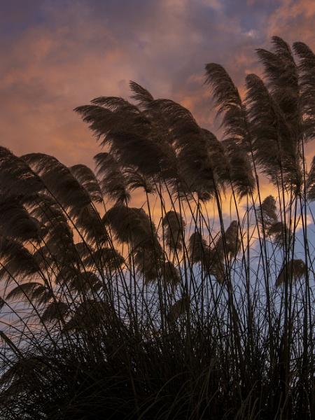 evening wind by Izak1333